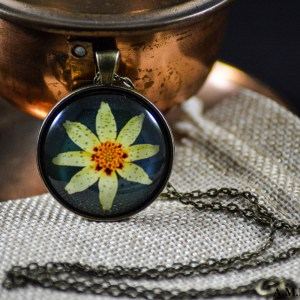 A yellow Coreopsis set in an Antique Bronze bezel with a brass chain. Image captured in the Summer of 2018 and pendant created in the Winter of 2019.