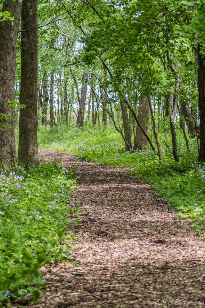 One of the lovely nature trails on my Spring hike at the Humiston Nature Trail. It was a wonderful time of year to visit.