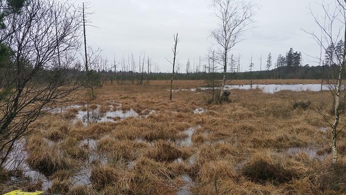 Hijkerveld op een wandeling over het Roots Natuurpad van Hijken naar Ruinen