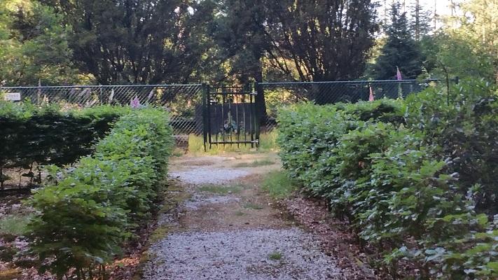 Wandelen over het Peelpad bij begraafplaats Familie WIllink bij Bronlaak in Oploo