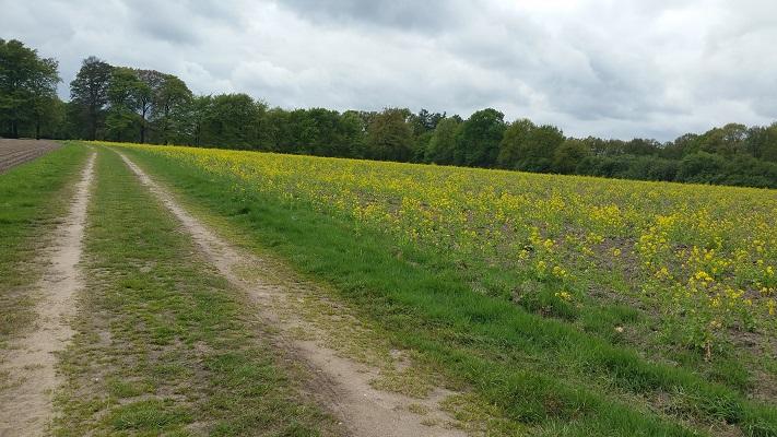 Richting Oosterbeek op wandeling over Roots Natuurpad van Schaarsbergen naar Doorwerth