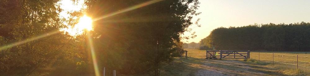 Opkomende zon tijdens wandeling met Jos van de Wijst op Maashorst in Uden