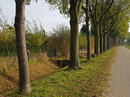 Wandelen over klompenpad Doddendaelpad over landweg in Beuningen