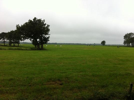 Weilanden bij Leek op een wandeling over het Drenthepad van Peizerwold naar Roden