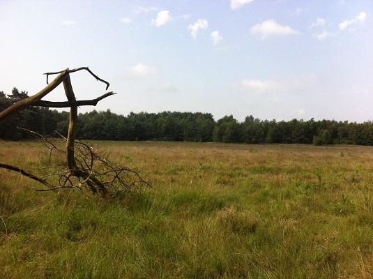 Holtingerveld op wandeling over Drenthepad van Uffelte naar Wittelte
