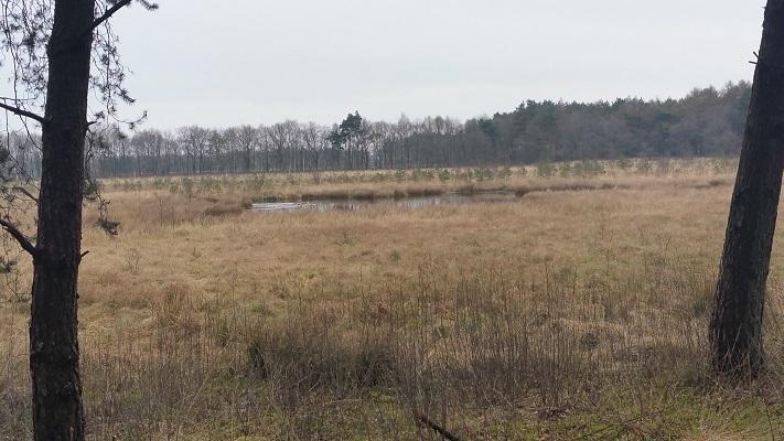 Wandelen over het Groot Frieslandpad in Norg