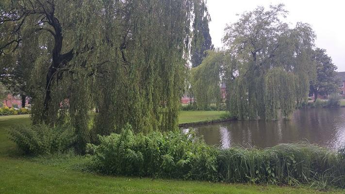 Wandelen over het Groot Frieslandpad door Park in Veendam