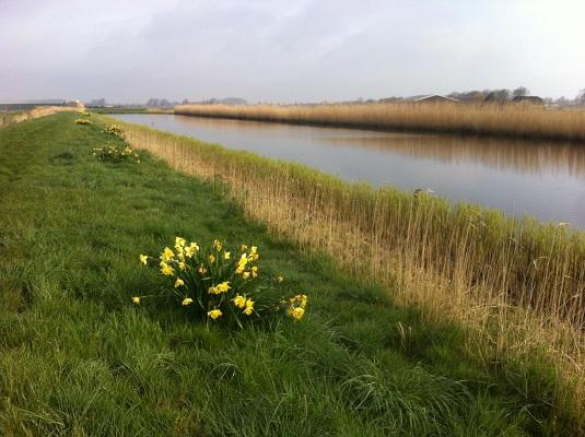 Wandelen over het Groot Frieslandpad langs de Ringsloot