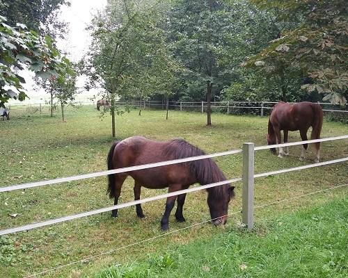 Wandelen over het Groot Frieslandpad bij paarden in Wedderheide