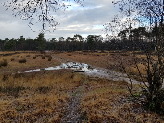 Stiphoutse Bossen tijdens een IVN-wandeling bij Stiphout in Noord-Brabant