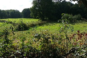 Natuur op een wandeling over het Maas- en Peelliniepad