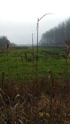 Hooibroeken tijdens wandeling over het Maaspad van Heusden naar Waalwijk