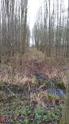 Elshoutse Wielen tijdens wandeling over het Maaspad van Heusden naar Waalwijk