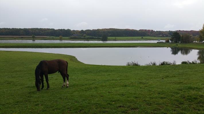 Paard bij de Maas op een wandeling over het Maaspad van Reuver naar Venlo