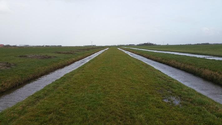 Pingjumer Gouden Halsban tijdens een wandeling over het Nederlands Kustpad van Makkum naar Harlingen