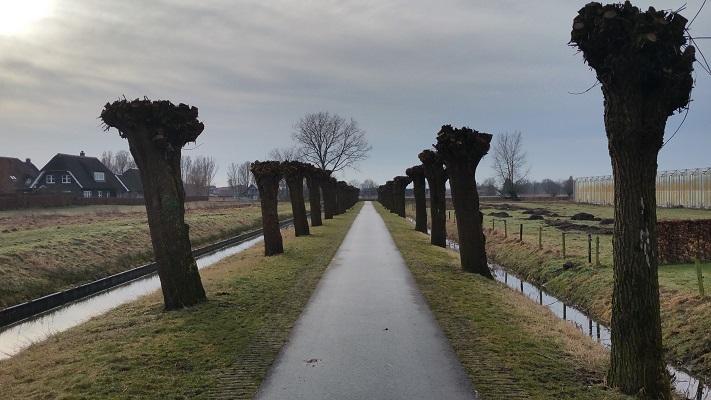 Wandelen in Park Lingezegen over Parkpad langs knotwilgen in Driel