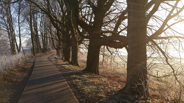 Wandelen in Park Lingezegen over het Waterpad in de uiterwaarden bij Arnhem