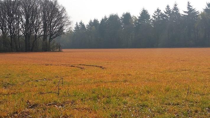Wandelen over het Peelpad bij een bespoten veld, mossantoveld