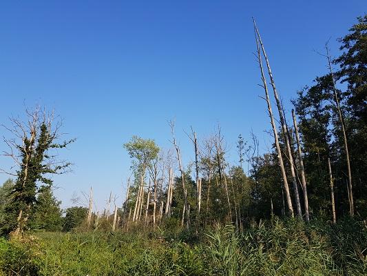 Wandelen over het Peelpad langs de Neerpeelbeek
