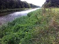 Knarbos op een wandeling over het Pionierspad van Lelystad naar Knarbos