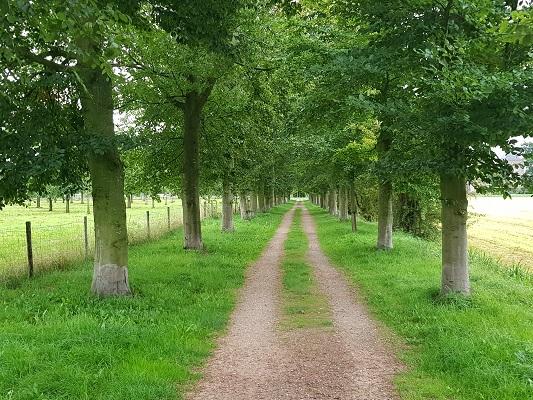 Wandelen over het Romeinse Limespad op pad naar Rhijnestein in Cothen