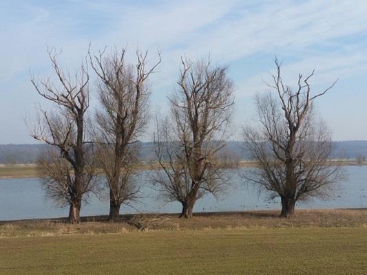 De Rijn met stuwwal op achtergrond op wandeling over Roots Natuurpad van Doorwerth naar Winssen