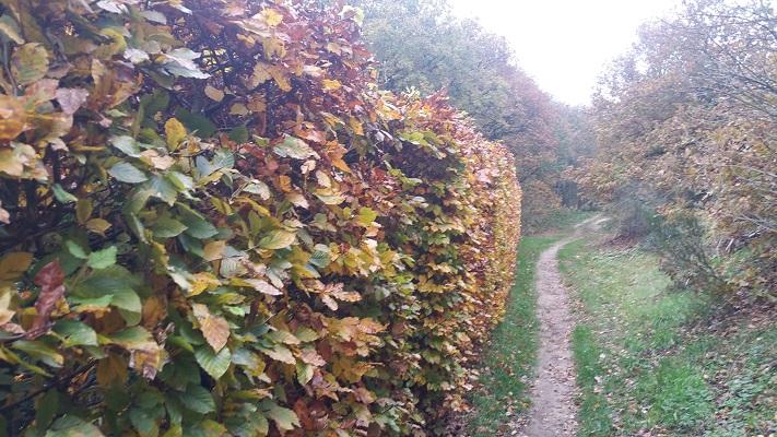 Pad naar Winssen op een wandeling van Hernen naar Winssen over het Roots Natuurpad