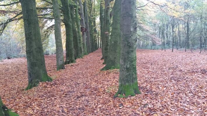 Eikenlaan bij Hernen op een wandeling van Hernen naar Winssen over het Roots Natuurpad