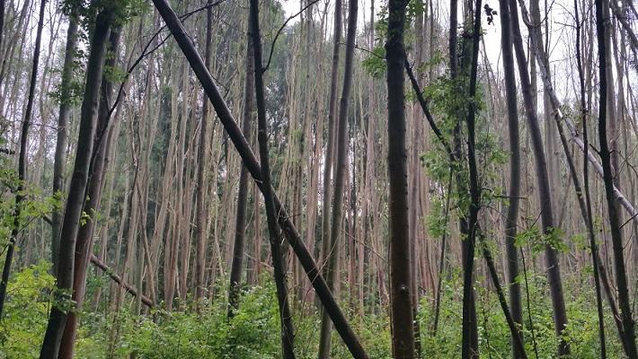 Bomen Wijboschbroek op wandeling over het Roots Natuurpad van Schijndel naar Veghel