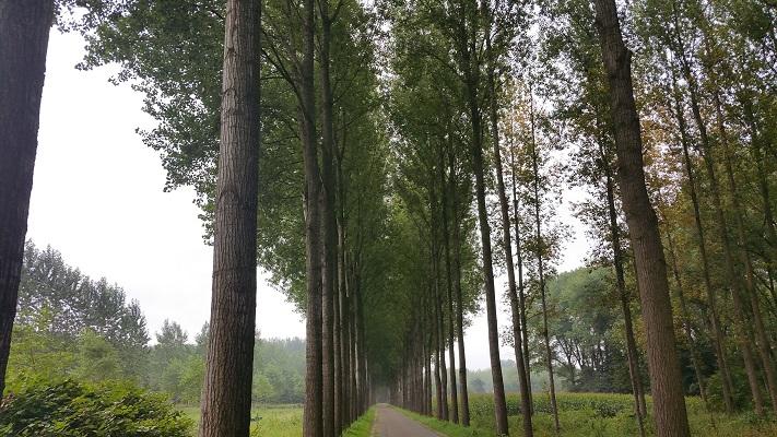 Houterd Schijndel op wandeling over het Roots Natuurpad van Schijndel naar Veghel