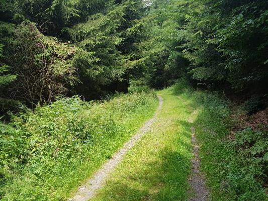 Bosweg tijdens wandeling van Kahler Asten naar de Hoheleyehutte over de Rothaarsteige in Sauerland in Duitsland