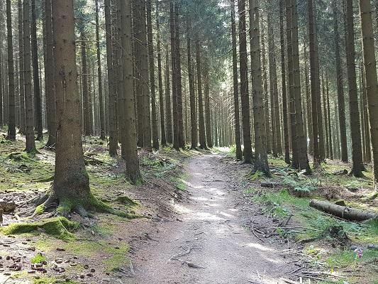 Bosweg tijdens wandeling van Willingen naar Usseln op wandelreis over Rothaarsteige in Sauerland in Duitsland
