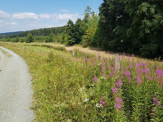 Bloemenweelde in Ruhrdal tijdens wandeling naar de Ruhrquelle op wandelreis naar Rothaarsteige in Sauerland in Duitsland