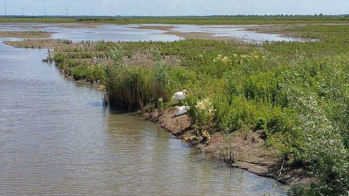Waterpartijen Tiengemeten tijdens wandeling op eiland Tiengemeten