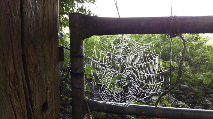 Spinneweb op een wandeling over het Veluwe Zwerfpad van Wolfheze naar Renkum