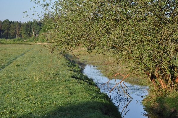 Venloop tijdens wandeling met Jos van de Wijst op Maashorst in Uden