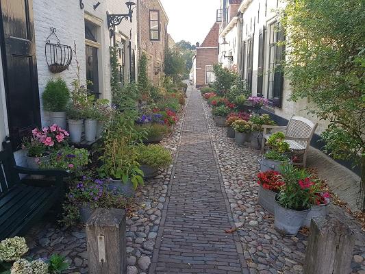 Wandelen over het Westerborkpad van 't Harde naar Elburg bij bloemrijke straat in Elburg