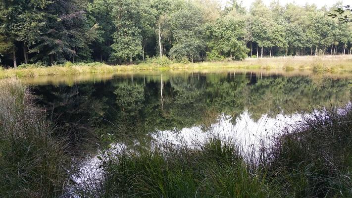 Vennetje bij Ruiten Aa in Sellingen op wandeling over Westerwoldepad van Sellingen naar Vlagtwedde