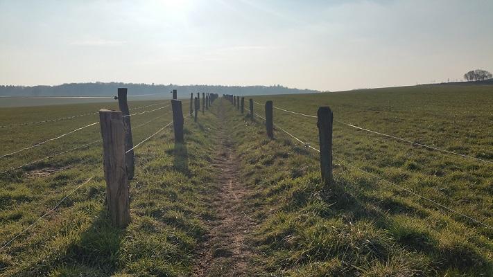 Wandelpad door graslanden tijdens wijnwandeling van Wanda Catsman in Groesbeek