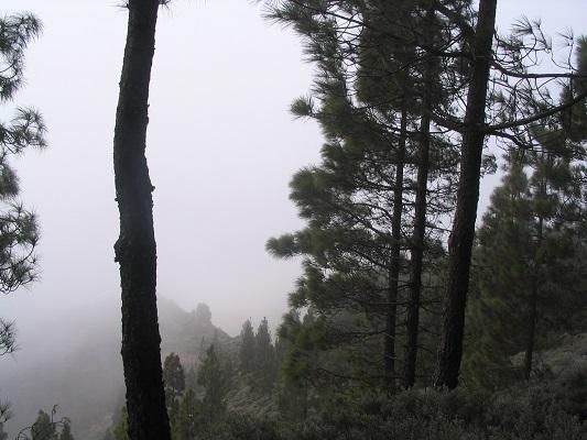Mist bij Montana las Tierras tijdens een wandelvakantie op Canarisch Eiland Gran Canaria