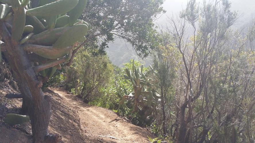 Wandelpad met cactussen bij Vallehermoso Valle Gran Rey Wandelpad hoog boven Barranco de Erque tijdens wandeling op een wandelvakantie op La Gomera op de Canarische Eilanden