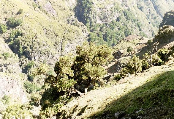 Dal bij Pico Areiro op wandelvakantie op Portugees eiland bloemeneiland Madeira