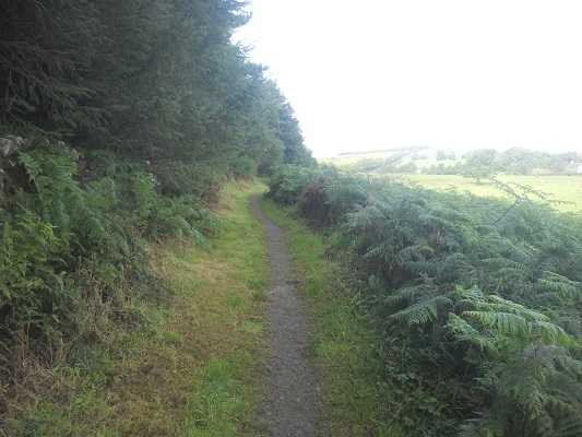Wandelpad langs varens op een wandeling van Chollerford naar Once Brewed op wandelreis over Muur van Hadrianus in Engeland