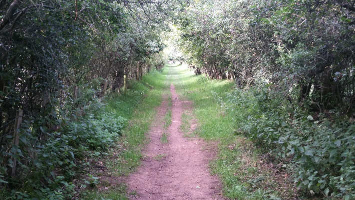 Bospad tijdens wandeling van Lanercost naar Carlisle tijdens wandelreis over Muur van Hadrianus in Engeland