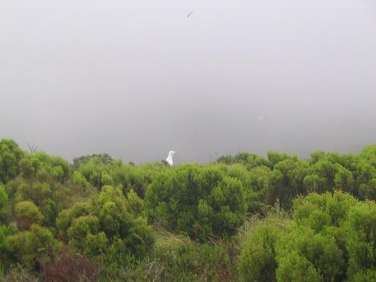 Meeuw bij Lagoa de Fogo Modderbaden bij Ribeira Grande tijdens een wandelvakantie op de Azoren, op eiland Sao Miguel