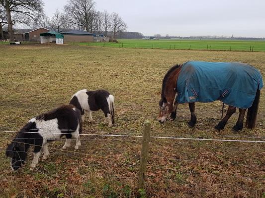 Paarden bij Linie den Hout tijdens een wandeling over het Zuiderwaterliniepad van Terheijden naar Oosterhout