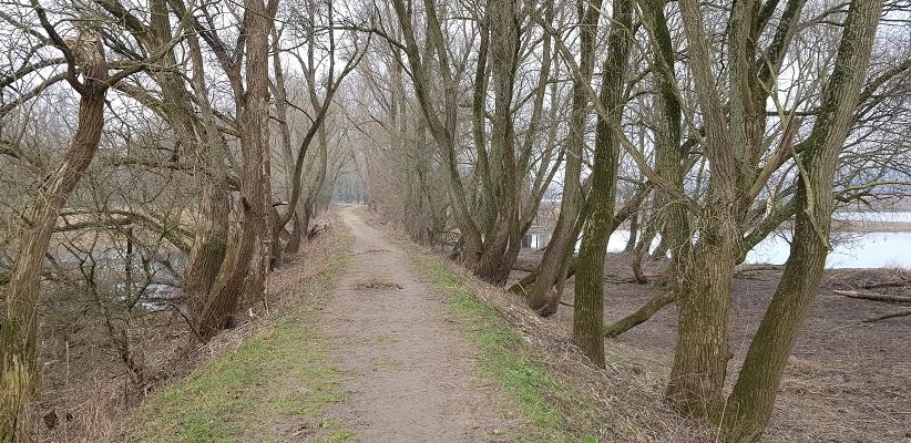 Hoog pad op IVN-wandeling door de Millingerwaard