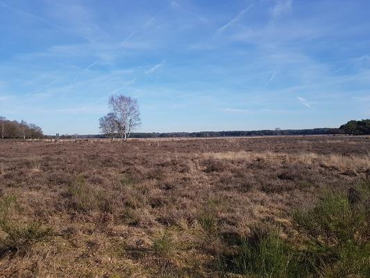 Westerheide bij Hilversum tijdens een NS-wandeling Landgoed Groeneveld van Baarn naar Hilversum