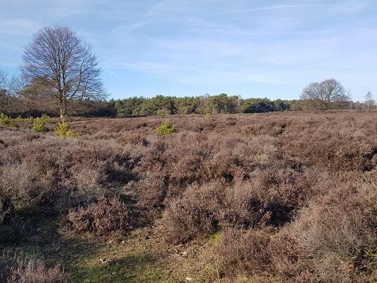 Lange zandweg richting Zuiderheide tijdens een NS-wandeling Landgoed Groeneveld van Baarn naar Hilversum