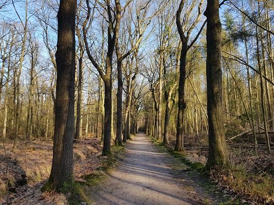 Boslaan tijdens een NS-wandeling Landgoed Groeneveld van Baarn naar Hilversum